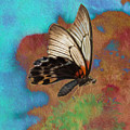 Digital Art Butterfly by Cindy Archbell