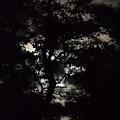 Digital Fine Art Work Full Moon Trees Gulf Coast Florida by G Linsenmayer