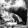 Digital Paint Black White Landscape Louisiana  by Chuck Kuhn