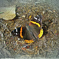 Digital Red Admiral Butterfly - Vanessa Atalanta by Mother Nature