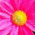 Digital Watercolour Of A Pink Daisy Pollen Flower by Anita Van Den Broek