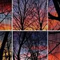 Digital Winter Trees by Chris Dunn