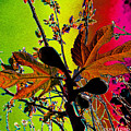 Figtree Leaves 4 by Don Pedro DE GRACIA