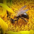 Diligent Pollinating Work by Matt Taylor