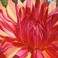 Dinner Plate Dahlia Flower Art Print Orange Baslee Troutman by Baslee Troutman