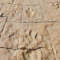 Dino Tracks In The Desert 4 by Tonya Hance