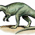 Dinosaur: Allosaurus by Granger