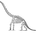 Dinosaur: Brachiosaurus by Granger