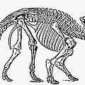 Dinosaur: Monoclonius by Granger