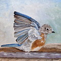 Dip Time - Eastern Bluebird by Angeles M Pomata