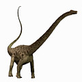 Diplodocus Profile by Corey Ford