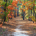 Autumn Scene Dirt Road by Joseph C Hinson Photography