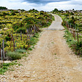 Dirt Road In Rab by Global Light Photography - Nicole Leffer