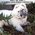 Dirty Dog Birthday Card by Ginny Barklow