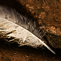 Discarded Feather by Jorgo Photography - Wall Art Gallery