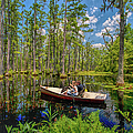 Discovery In A Cypress Swamp by Dan Carmichael