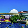 Florida by Buddy Morrison