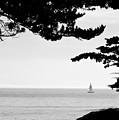 Distant Sails by Grace Dillon