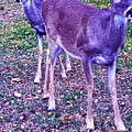 Distrubing Deer by Chuck Taylor