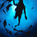 Diver And Reef Fish by Ed Robinson - Printscapes