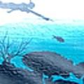 Diver by Rafael Medina