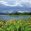 Dm9235 Mt. Moran From Oxbow Bend by Ed Cooper Photography