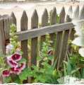 Do-00099 Fence-flowers by Digital Oil