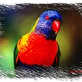Do-00153 Colourful Lorikeet by Digital Oil
