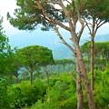 Do-00301 Pine Trees Forest In Aaraya by Digital Oil
