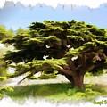 Do-00319 Cedar Tree by Digital Oil