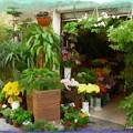 Do-00433 Florist In Gemmayzeh by Digital Oil