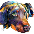 Doberman Watercolor by Christy  Freeman