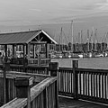 Dock At Mandarin Park Black And White by Spencer Studios