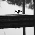 Dock Bird Pre Flight by Rob Hans