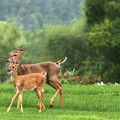 Doe And Fawn by Angela Rath