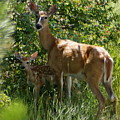 Doe And Fawn by Ben Upham III