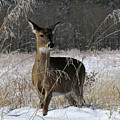 Doe In The Cove by Douglas Stucky