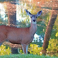 Doe Surprise by Donna Kennedy