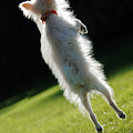 Dog - Jumping by Jill Reger