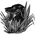 Dog, 19th Century by Granger