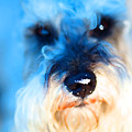 Dog 2 . Photo Artwork by Wingsdomain Art and Photography