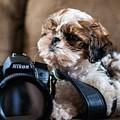 Dog 2 by Rossana Magri