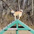 Dog 389 by Joyce StJames