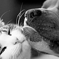 Dog And Cat  by Sumit Mehndiratta