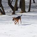 Dog And Winter by Miroslav Nemecek