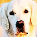 Dog Art - Golden Moments by Sharon Cummings