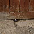 Dog At The Door by Aline Kala