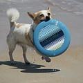 Dog Beach Bliss by Mandy Shupp