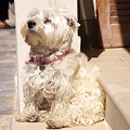 Dog Begging by Ron Koivisto