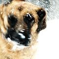 Dog Blizzard - German Shepherd by Angie Tirado